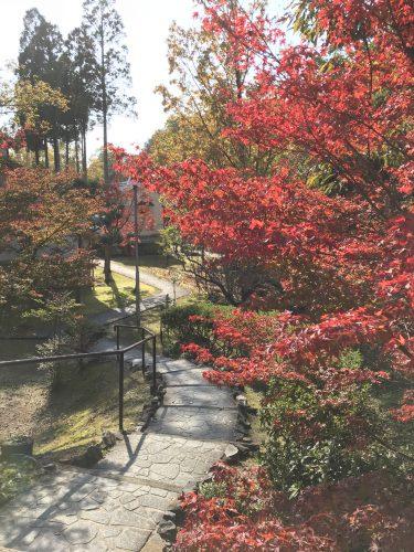 autumn-img1
