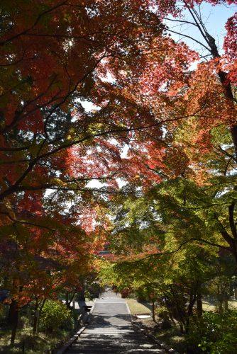 autumn-img7